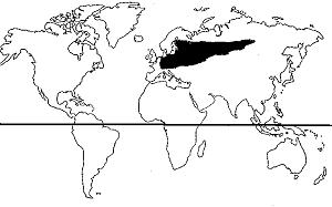 mapa-pino-abeto